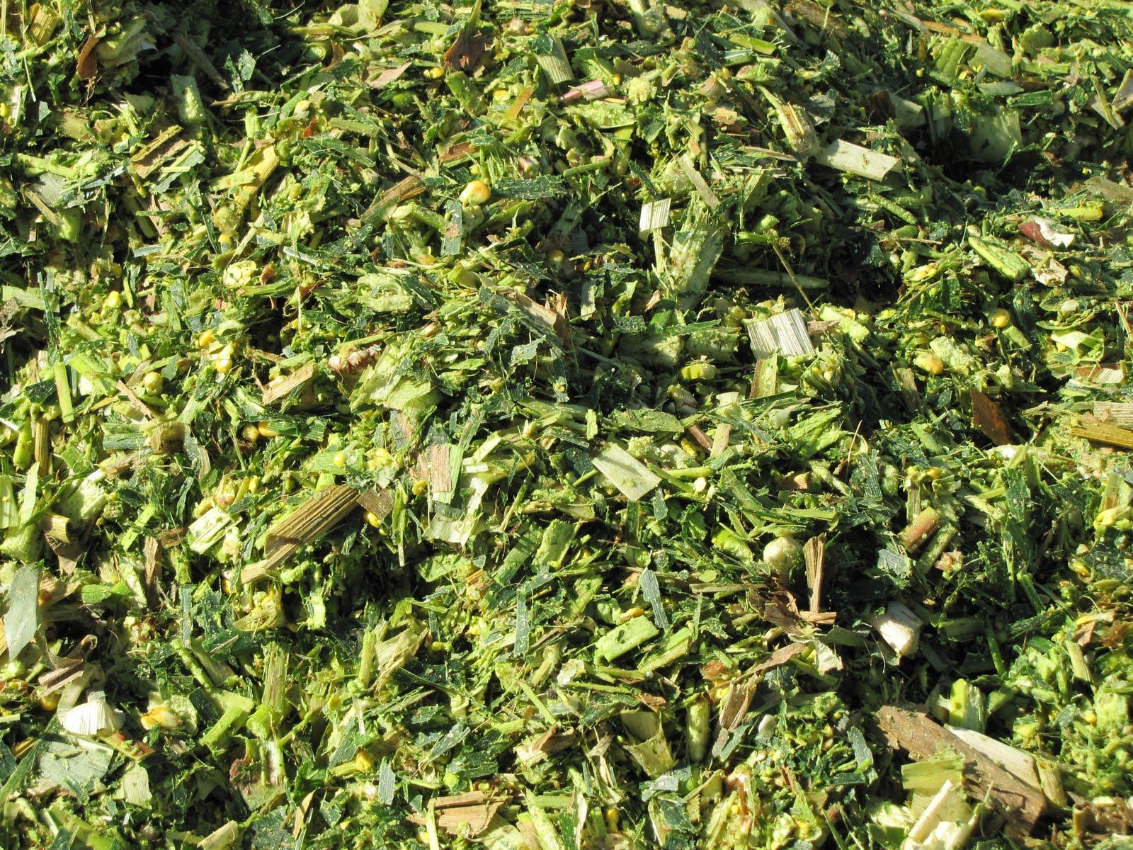 Clinker Picture Of Corn : Cornstalk pellet agrowaste hx